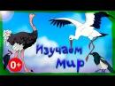 Мультик про птиц. Развивающие мультики для детей до 4-х лет. СБОРНИК 3.