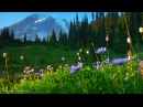 Relaxing Music: Peaceful Music, Instrumental Music Nature's Landscapes by Tim Janis