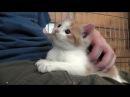 Jimi The Love Bug Kitten Part 1