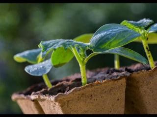 10 главных ошибок при выращивании рассады