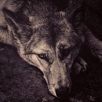 Волк Ничей