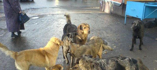 Напали бездомные собаки