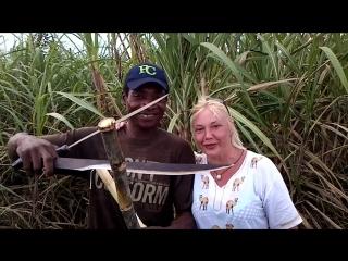 Плантация сахарного тростника...в Доминикано!