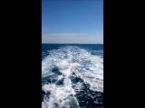 maestro_sailing