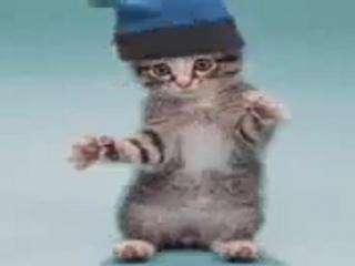 я смотрю смешных котиков, потому что я одинок
