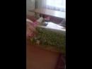Русик помогает детям перед экзаменам Разпевки на альтерацию
