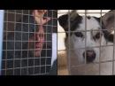 Собрал 200 000 евро на нужды приюта для животных, заперев себя в клетке на 87 часов