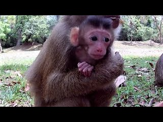🙉Newborn baby monkey with young mother😍 - Episode 03