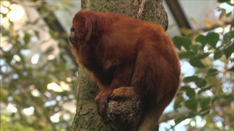 7 августа в 19:00 смотрите программу «Звезды зоопарков мира»