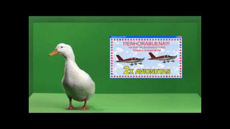 Liberad al Pato Willix