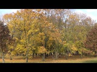 Брестская крепость! Видео 5