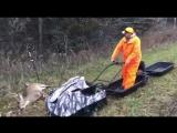 Мотобуксировщик Baltmotors Snowdog и охота на оленя:)