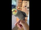 попугай дабстеп