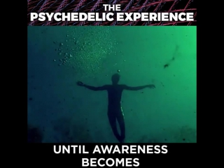 What is the Psychedelic Experience?