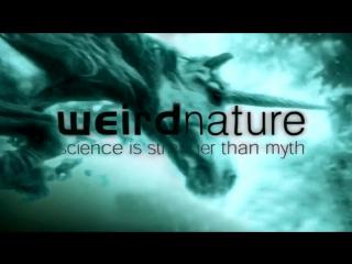 BBC Эти загадочные животные 05 Странное партнерство