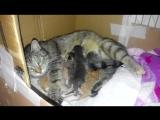 Олеся и котята