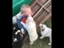 Дети и собаки, счастливы вместе