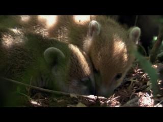 BBC Жизнь / BBC Life 3 cерия Млекопитающие / Mammals (2009)