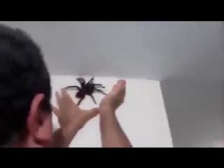 Как убрать паука со стены