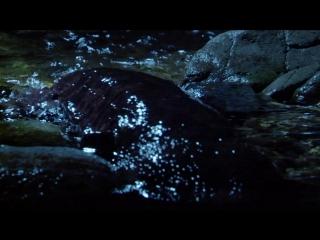 BBC: Планета Земля (3) Пресная вода / Planet Earth (2006) HD (720p)
