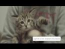 Дарим котят первым новоселам в Образцово