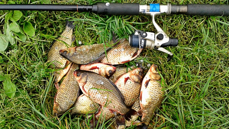 Бюджетная прикормка для карася, плотвы, леща и другой белой рыбы