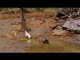 BBC - Walking With Dinosaurs Ep1 New Blood  - ArabHD.net