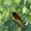 Бёрдинг и организация орнитологических экскурсий