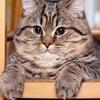 Vadik Kot