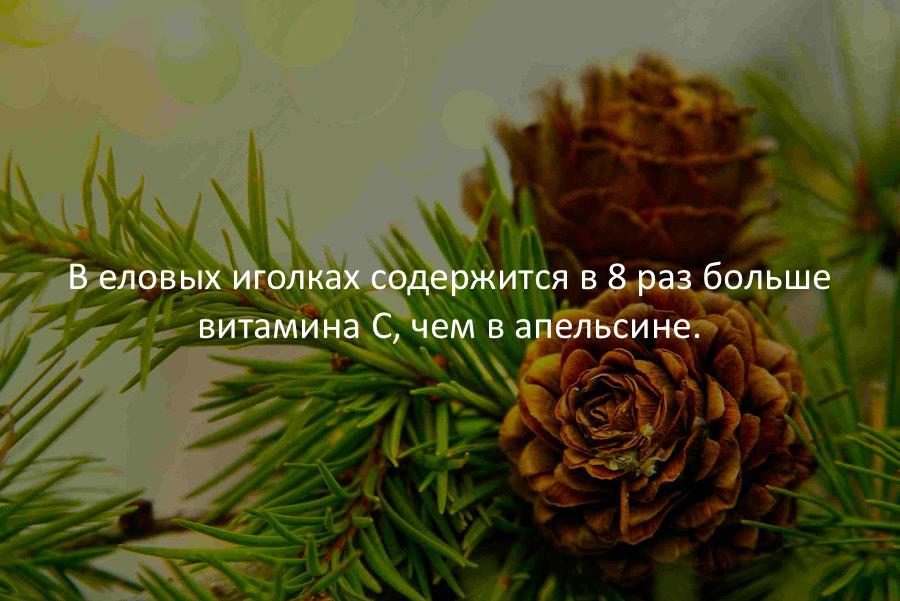 https://cs7051.vk.me/c636627/v636627585/32902/twc4gDZAPQ0.jpg