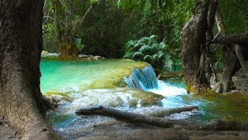 Waterfall Jungle Sounds 4 - Relaxing Tropical Rainforest Nature Sound - Singing Birds Ambience