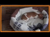 Лежанка для питомца! # a bed for your pet