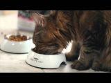 Чем и как правильно кормить кота: советы ветеринара