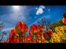 Лучшая музыка для души - Вальс цветов П.Чайковский Музыка Tchaikovsky - Waltz of the Flowers