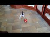 Василий гоняет мячик