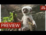 Langur monkeys grieve over fake monkey