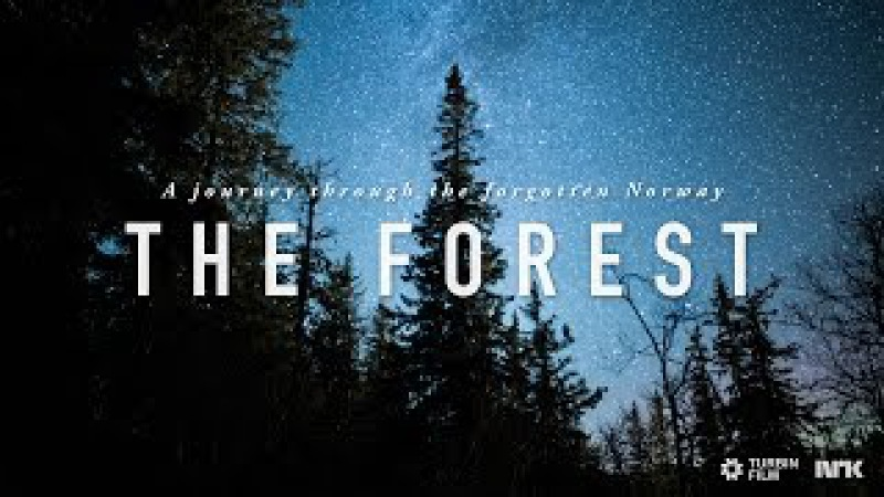 THE FOREST - A Time-Lapse Journey Through the Forgotten Norway 4K