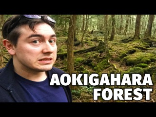 Wandering through the Suicide Forest | Aokigahara, Japan