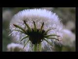 Microcosmos -- Le peuple de l'herbe (Blu-Ray)  httpsvk.comhoroshiefilmu