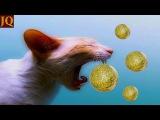 10 полезных товаров для котов с Алиэкспресса / Самые лучшие вещи с Алиэкспресса   J...