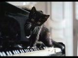 Mystery Pianist - La campanella