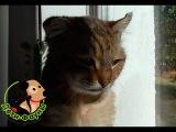 Раны у кота. История про кота Фредди с большой раной на шее