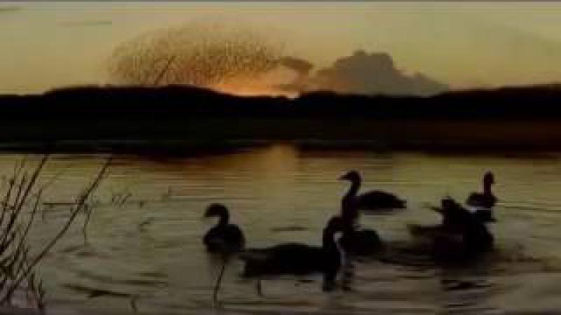 Перелетные птицы Рома Жуков