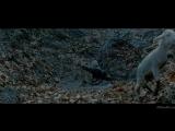 Братство волка (2001).720