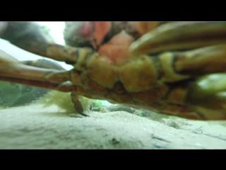 Последние кадры с камеры GoPro, пролежавшей на дне моря около года
