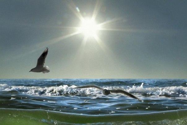атлантида океан птицы