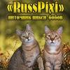 Кошки Пиксибоб питомник RussPixi