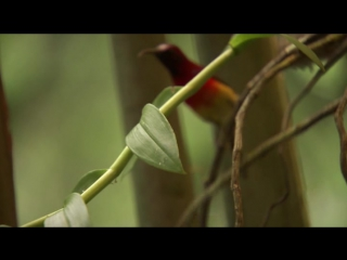 BBC Wild China 2 Shangri-La/Дикий Китай 2 Шангри-Ла