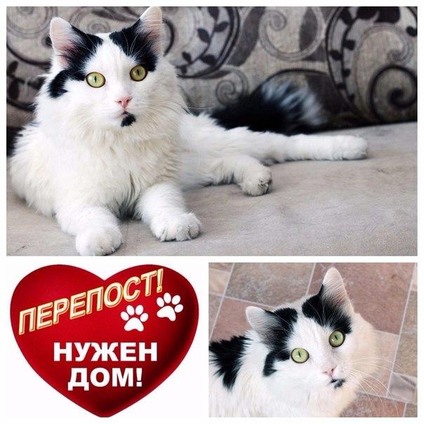 Черно-белая классика! 💕 Встречайте: кот Мурзик😺. Красавец, умница и л
