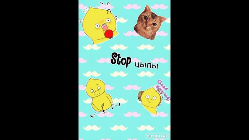 Стоп цыпы😂